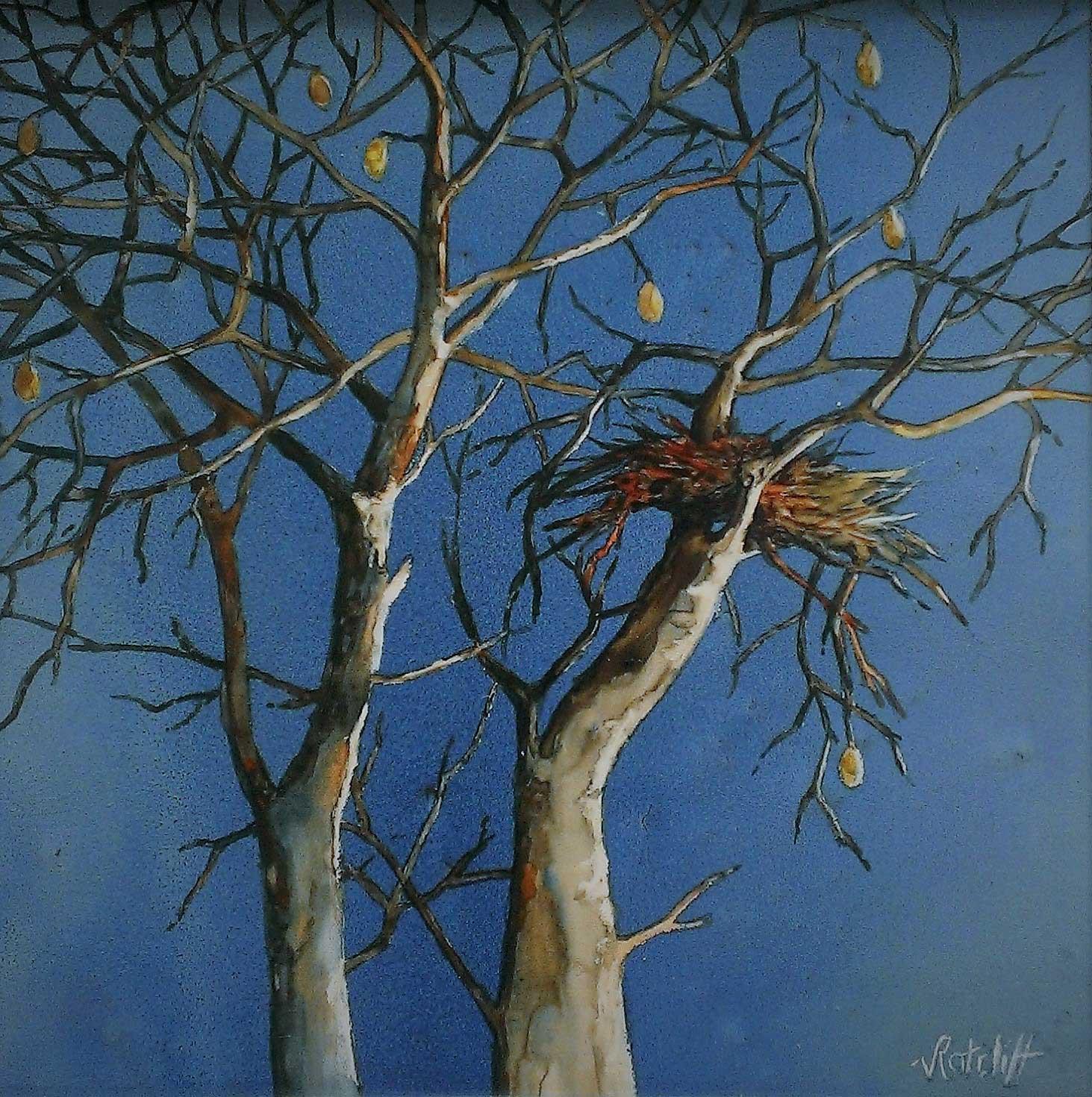 Watercolour - Boab Nest 3